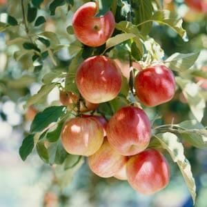 fruit-garden-4.jpg